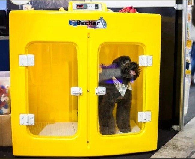 maquina-de-secar-animais-bybecker-220v-spa-pet-D_NQ_NP_878091-MLB29321519149_022019-F